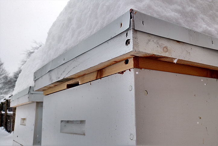 Two bee hives in winter with stow piled atop