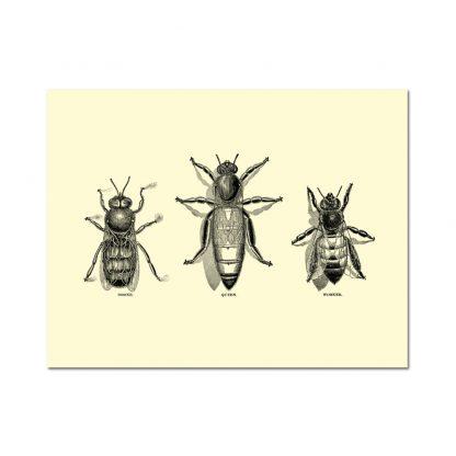 Vintage Honey Bee Note Card